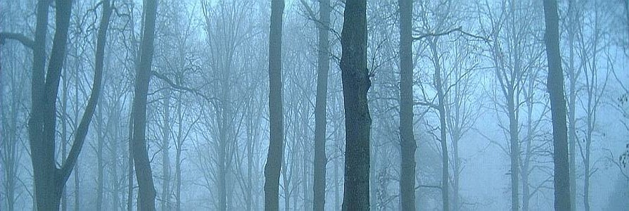 Eerie woods of Music
